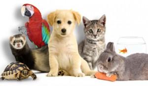 Bien entretenir le bien-être de votre animal de compagnon