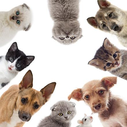 Une couverture santé pour son animal de compagnie